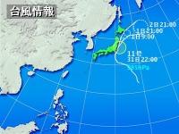 typha-1.jpg